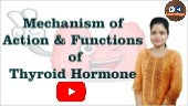Mechanism of Action & Functions of Thyroid Hormone I Endocrine Physiology