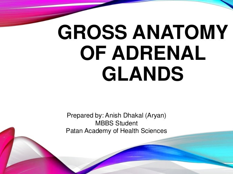 Adrenal Glands Anatomy