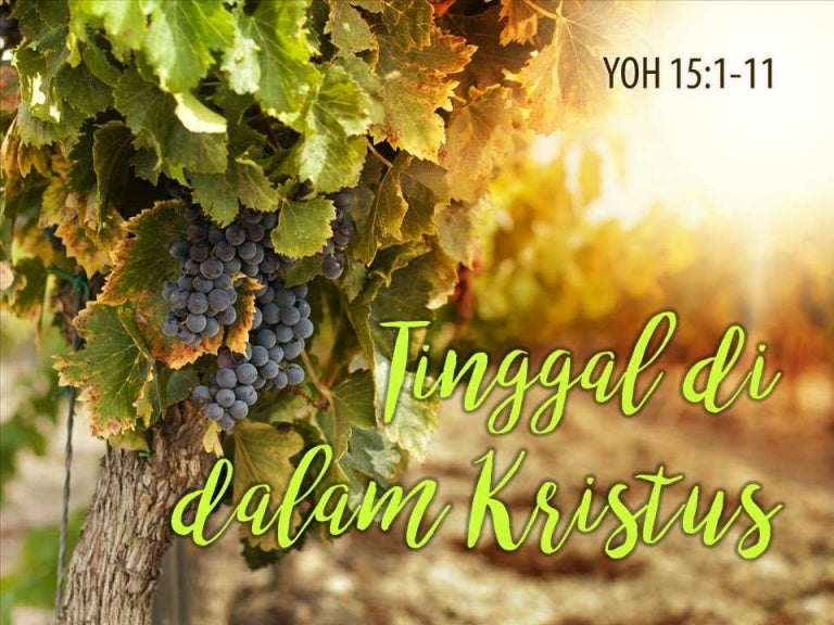 91+ Gambar Pokok Anggur Dan Rantingnya HD