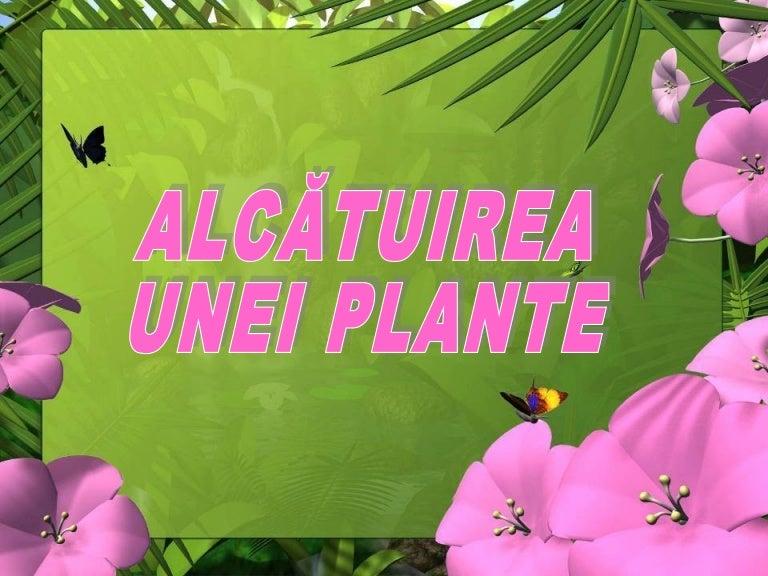 Alcatuirea Unei Plante