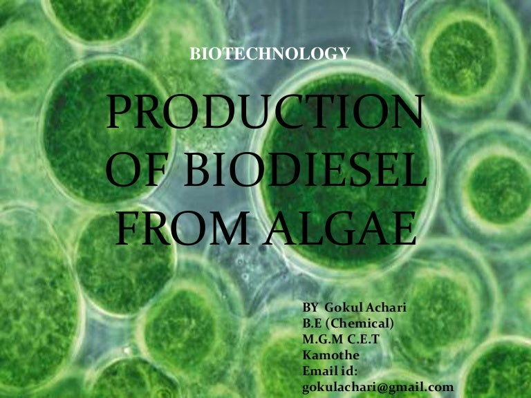 production of biodiesel from algae