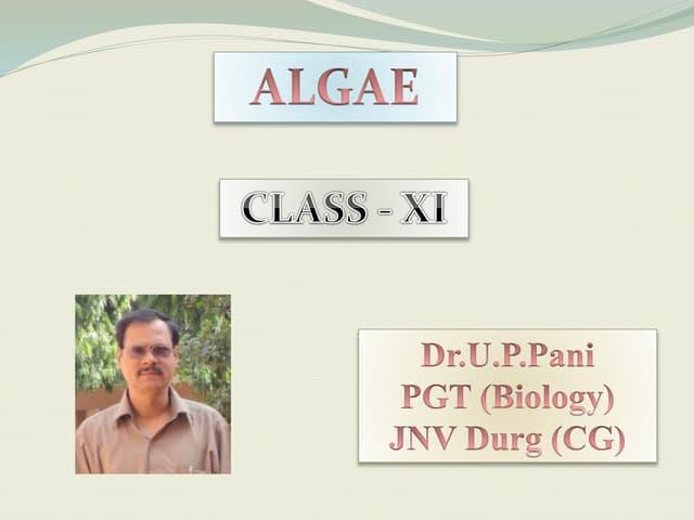 ALGAE (PLANT KINGDOM)
