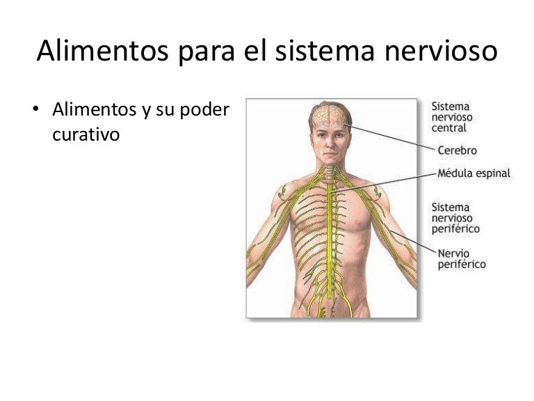 alimentación para el sistema nervioso