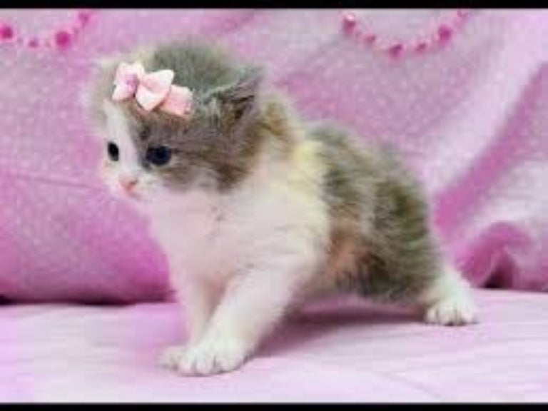 Image of: Kitten An Error Occurred Slideshare All Funny Cat Videos