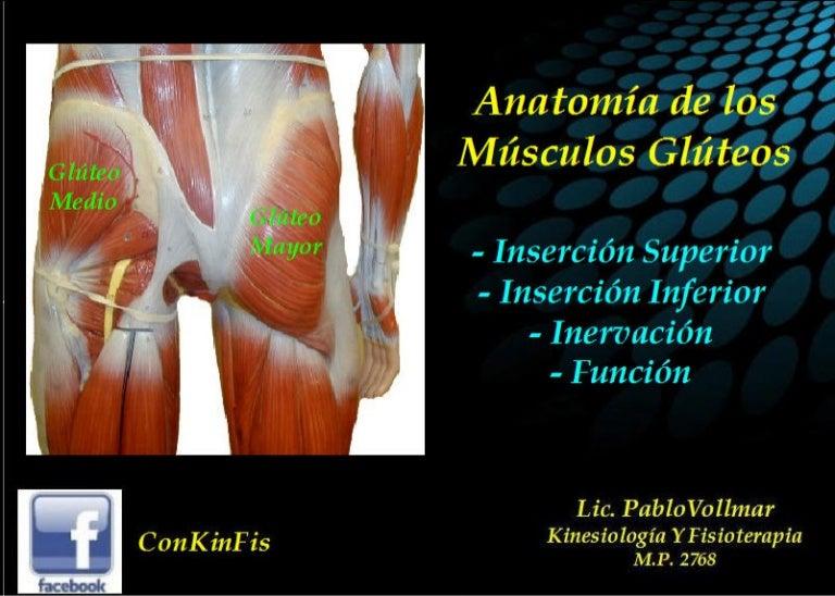 Anatomia Musculos Gluteos