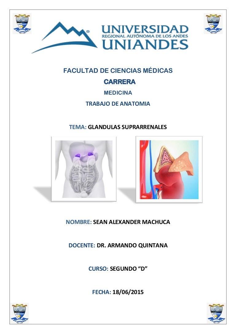 Anatomia de las glandulas suprarrenales