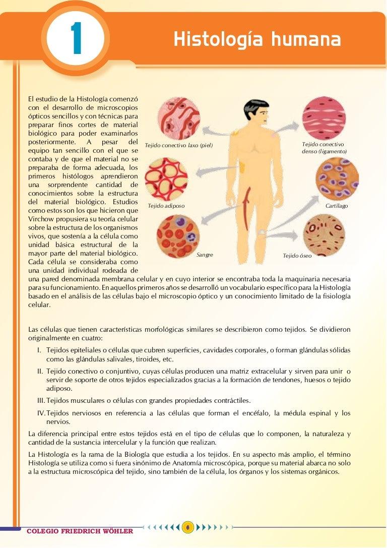 Anatomía 1 - Teoría Wohler