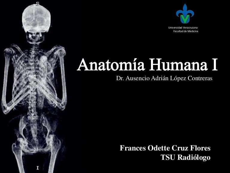 Osteología: Hueso Palatino