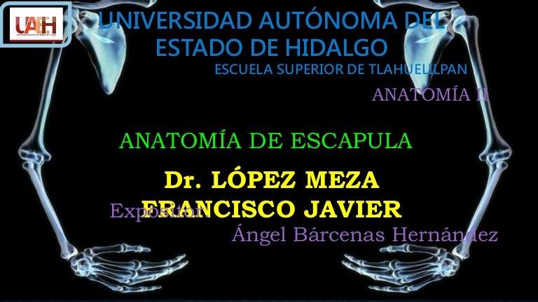 ANATOMIA DE ESCAPULA