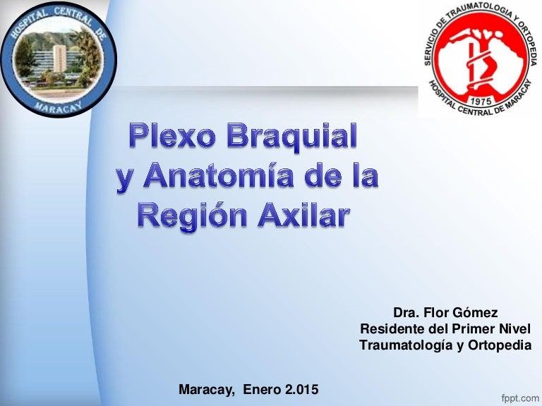 Anatomía de fosa axilar y plexo braquial