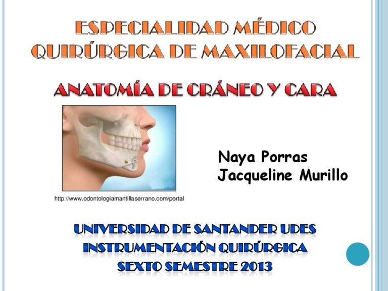 Anatomía en maxilofacial