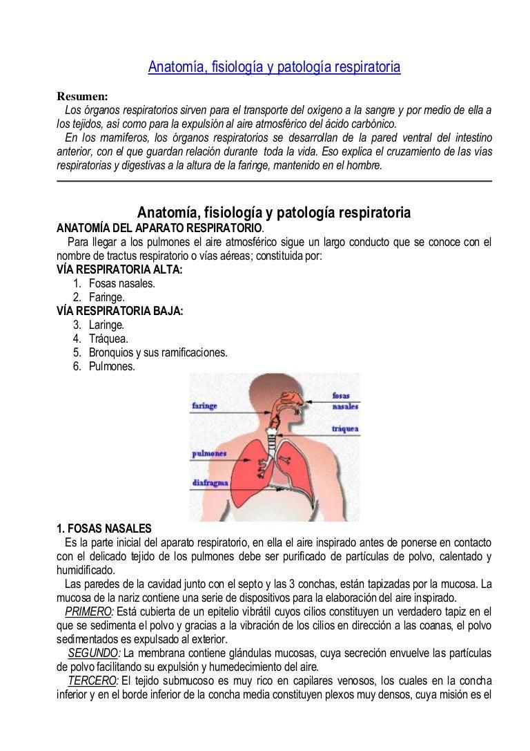 Anatomía, fisiología y patología respiratoria