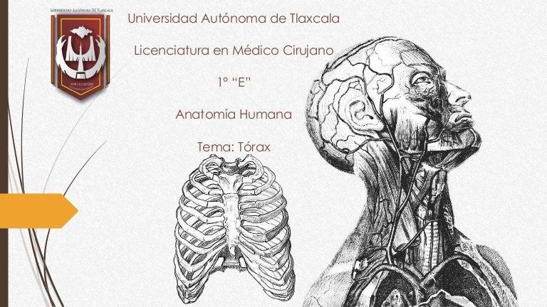 Anatomía humana I tórax