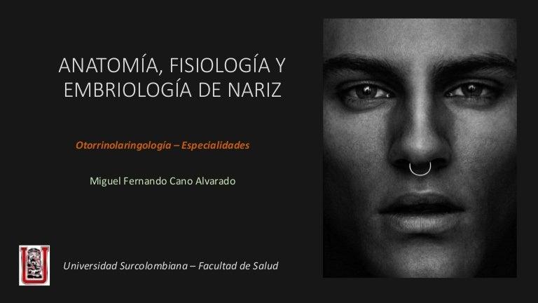 Anatomía, embriología y fisiología de la nariz