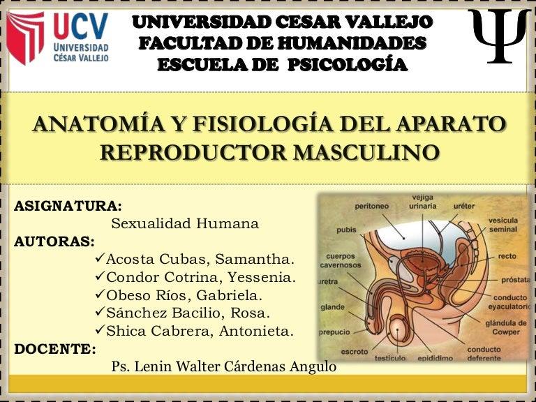 anatomia y fisiologia del aparato reproductor femenino y masculino pdf