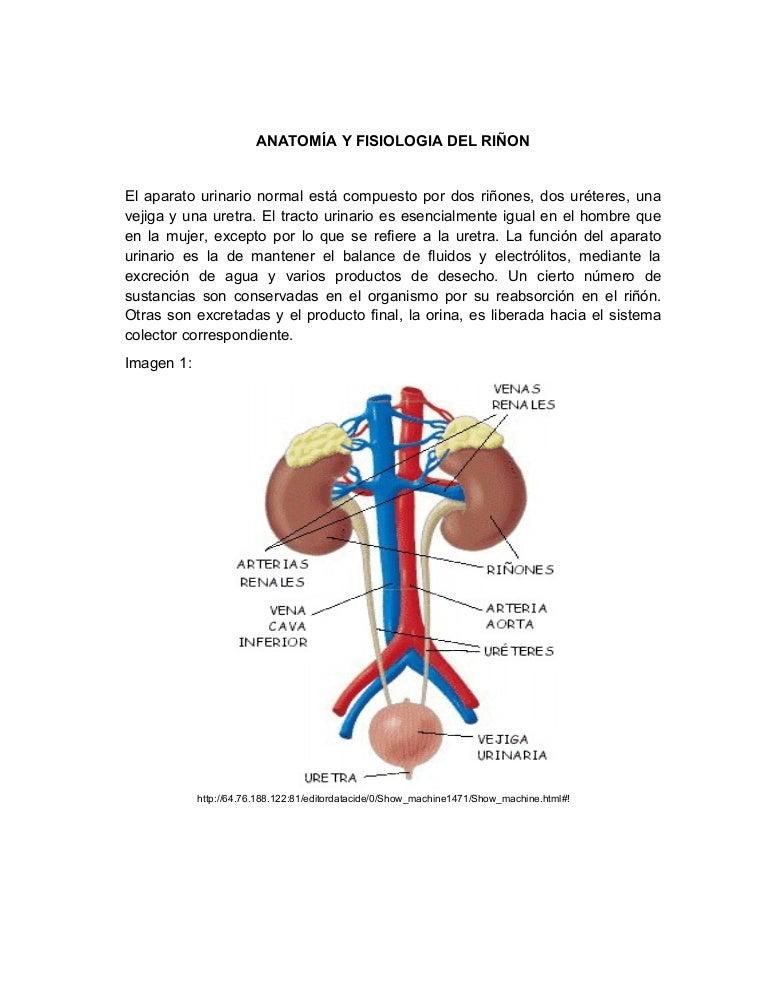 Anatomía y fisiologia del riño