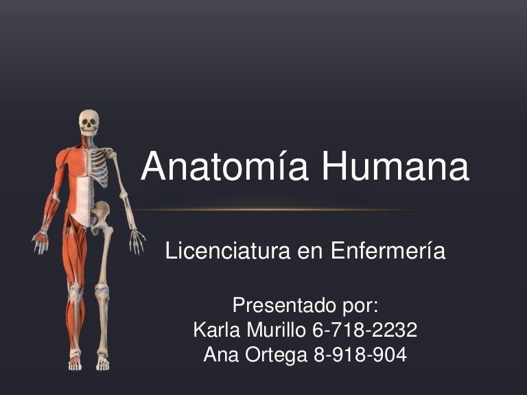 Anatomia ana ortega, k arla murillo