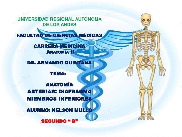 Excelente Anatomía Ciencia Médica Bandera - Anatomía de Las ...