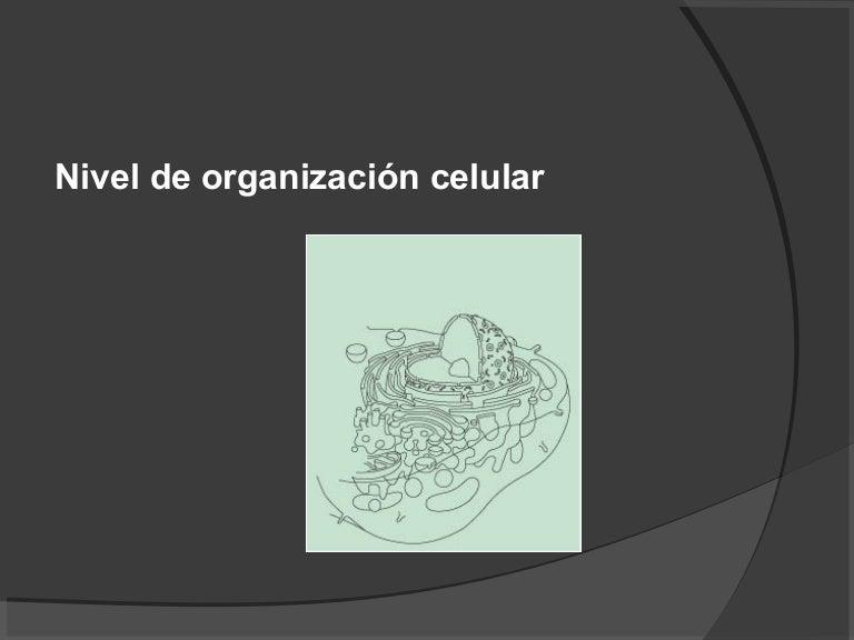 Anatomia celular