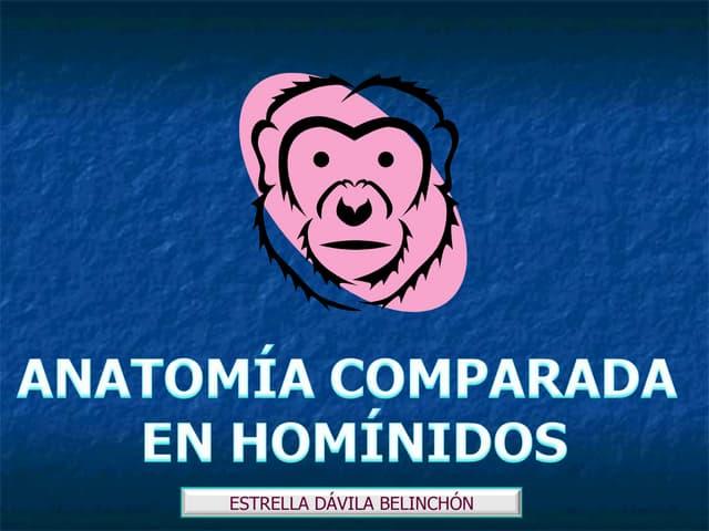 Anatomia comparada hominidos