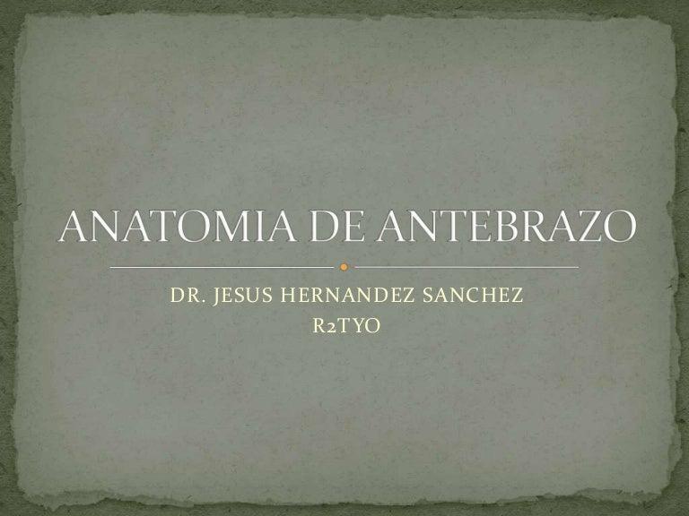 Anatomia de antebrazo