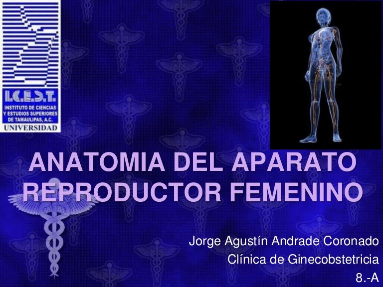 anatomiadelaparatoreproductorfemenino-160210061919-thumbnail-4.jpg?cb=1455085240