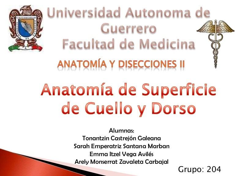Increíble Estructuras Del Cuello Anatomía Molde - Anatomía de Las ...