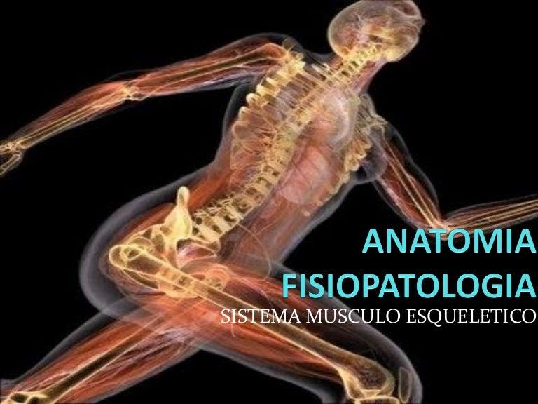 Anatomia fisiopatologia sistema musculo esqueletico