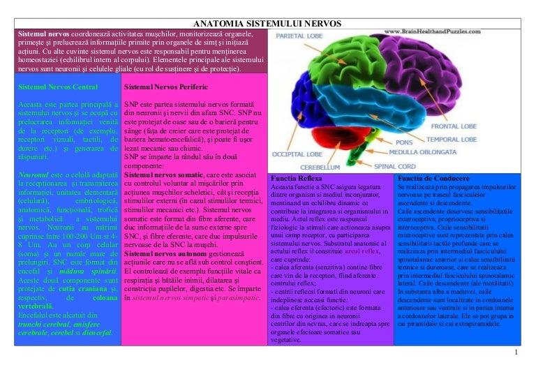 sistemul nervos larg al sistemului nervos degenerare parazitară