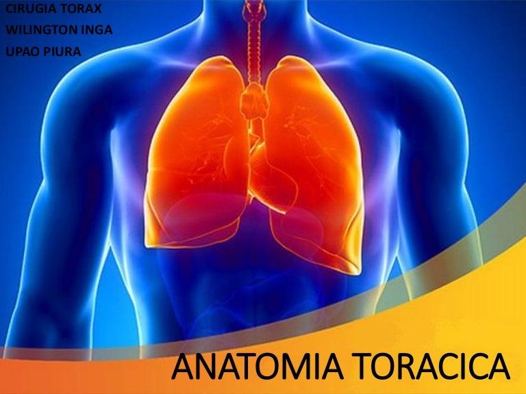 Lujo Anatomía De Torácica Ilustración - Anatomía de Las Imágenesdel ...