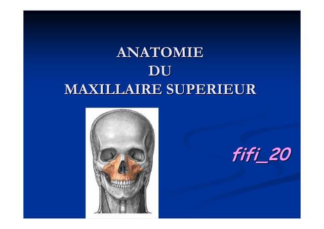 Anatomie du maxillaire