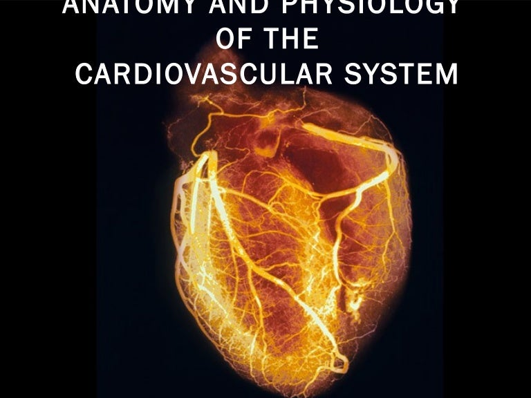 Anatomy And Physiology Of The Cardiovascular System Medical Surgical