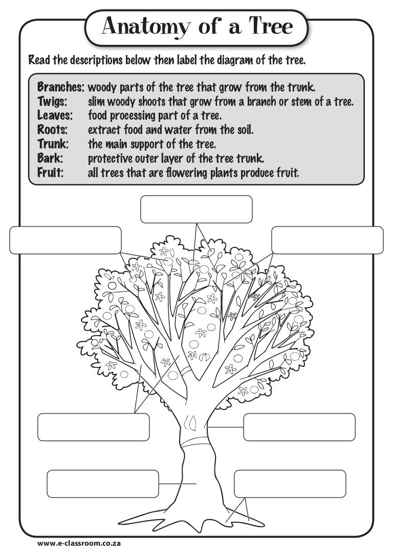Workbooks Plant Worksheets For Kindergarten Free Printable