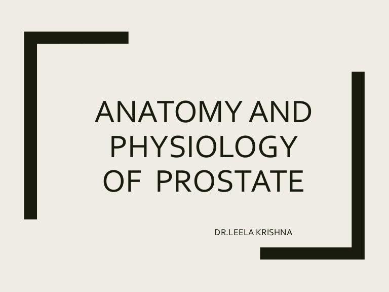 prostate anatomy slideshare