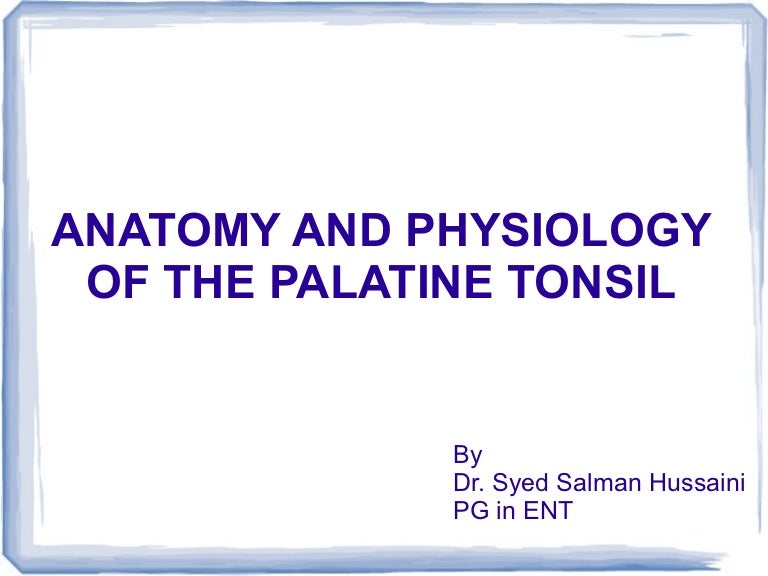 Anatomy And Physiology Of The Palatine Tonsil