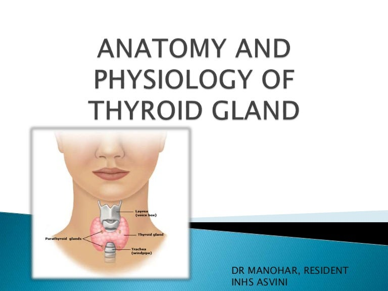 Anatomy and physiology of thyroid gland