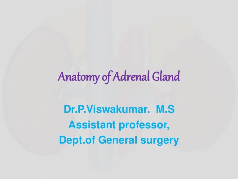 Surgical Anatomy Of Adrenal Gland