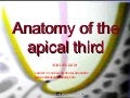 Anatomy of apical third /certified fixed orthodontic courses by Indian dental academy