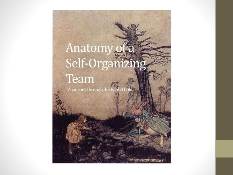 Anatomy Of A Self Organizing Team
