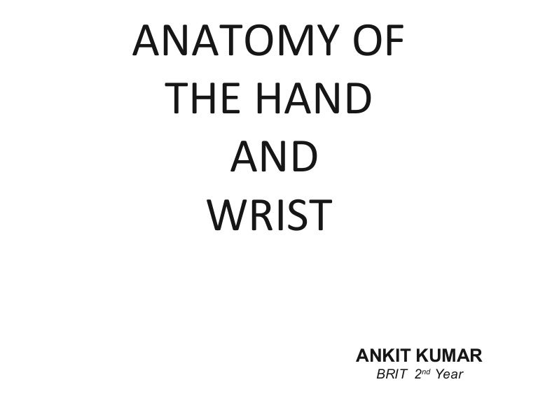 Anatomy Of Hand And Wristppt