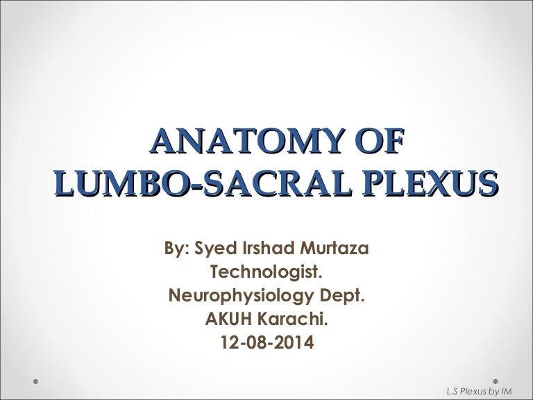 Anatomy Of Lumbosacral Plexus By Murtaza Syed