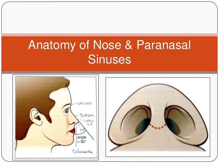 Anatomy Of Nose Paranasal Sinuses