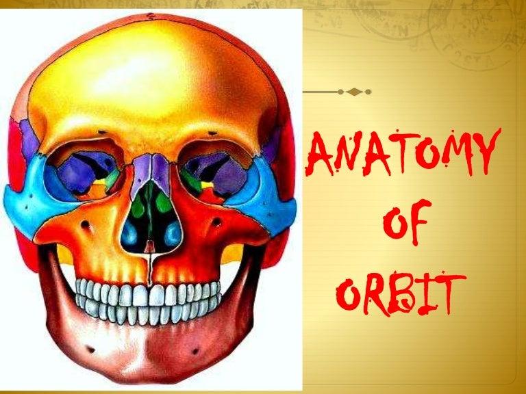 Anatomy of orbit sivateja