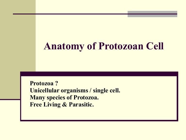 protozoa organisms anatomy of protozoan cell