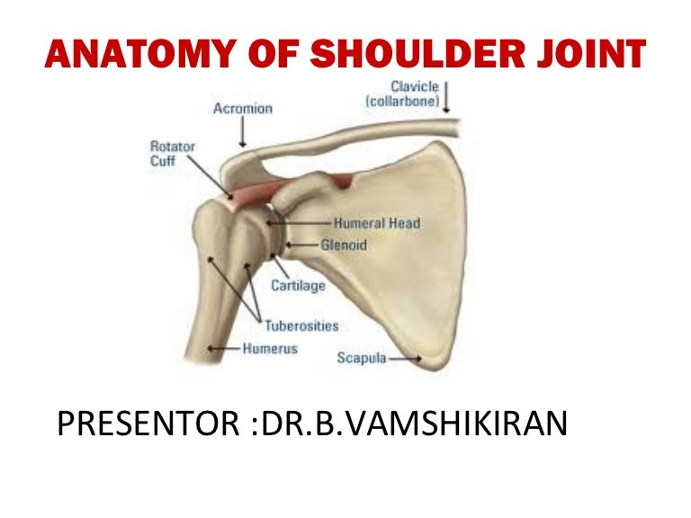 Anatomy Of Shoulder Joint Vamshi Kiran