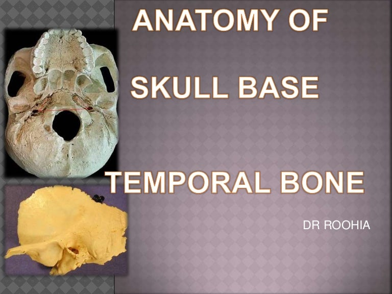 Anatomy Of Temporal Bone And Skull Base