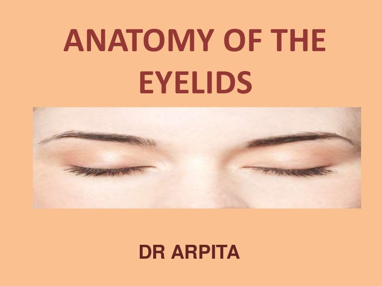 Anatomy Of The Eyelids
