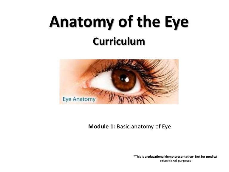 Anatomy Of The Eye Test