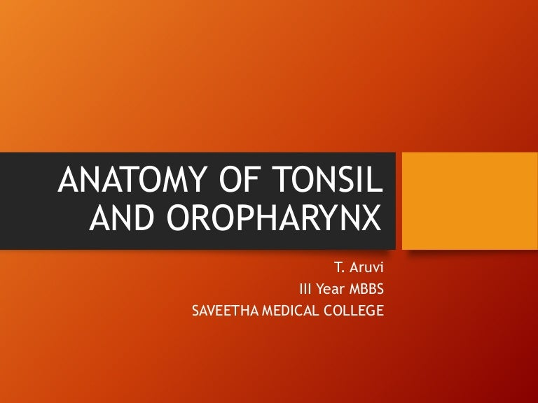 Anatomy of tonsil and oropharynx