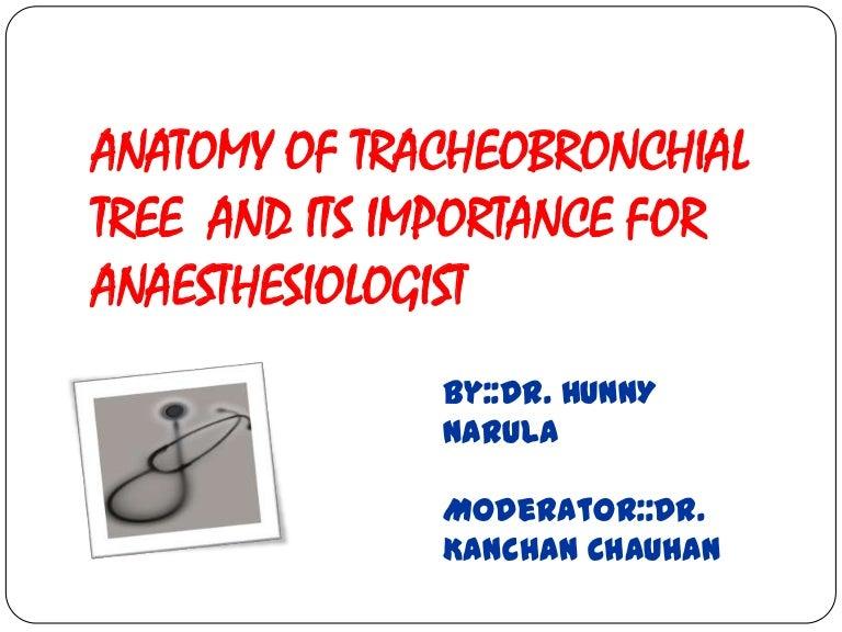 Anatomyoftracheobronchialtree 130207033855 Phpapp01 Thumbnail 4gcb1360208372